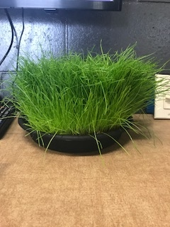 Work Environment and Cat Grass 2